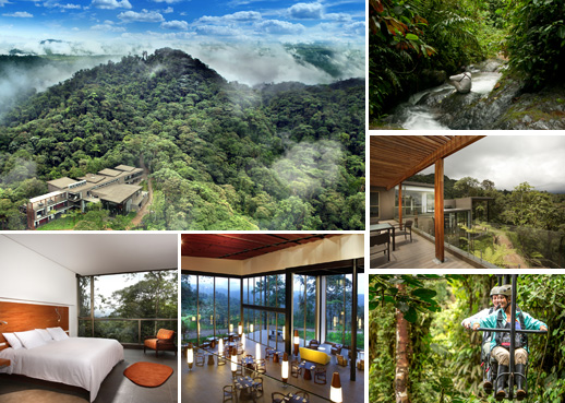 amazon rainforest plants collage. the adventure begins in ecuadoru0027s heritage capital quito at our 8 am pickup time for guests staying quitou0027s main hotels will be confirmed by amazon rainforest plants collage m